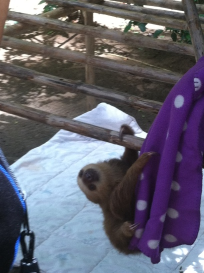 A Baby Sloth Climbing Around With A Blanket